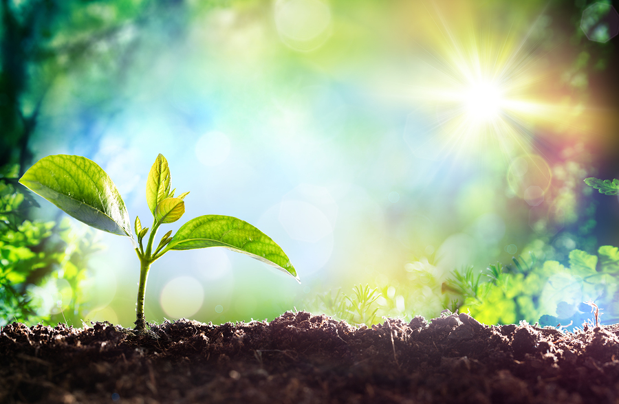 bigstock-Growing-Sprout-Beginning-Of-115095032